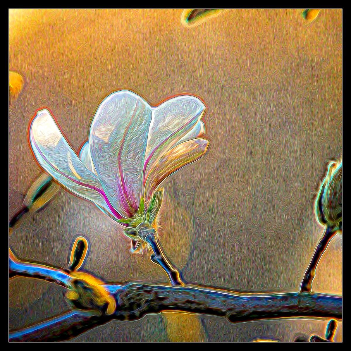 玉蘭花開春色到_圖1-3