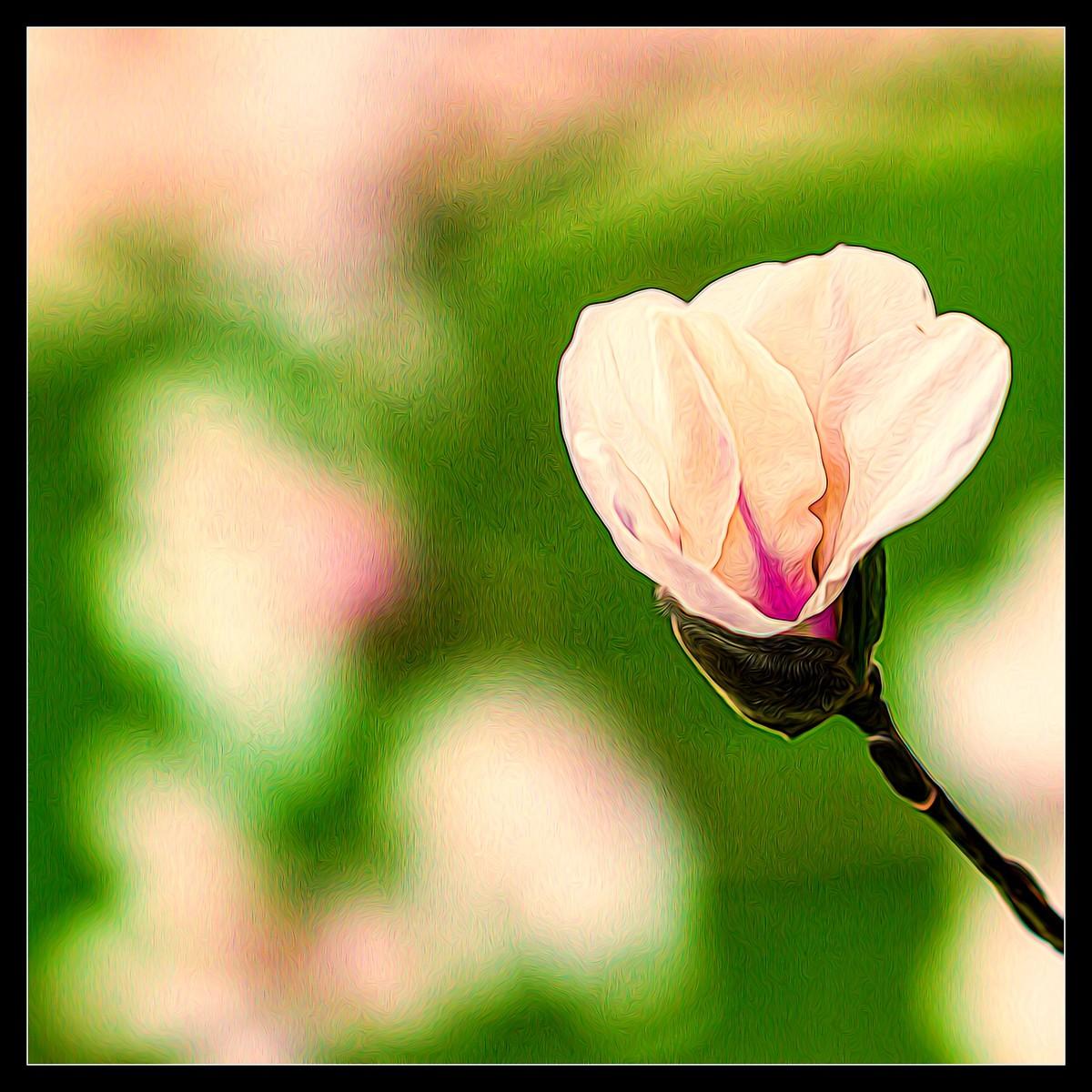 玉蘭花開春色到_圖1-4