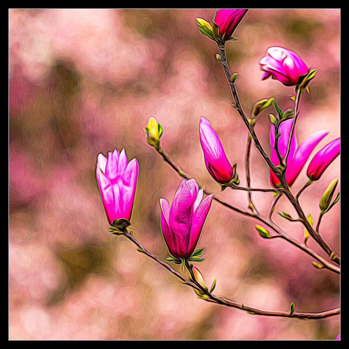 玉蘭花開春色到_圖1-5