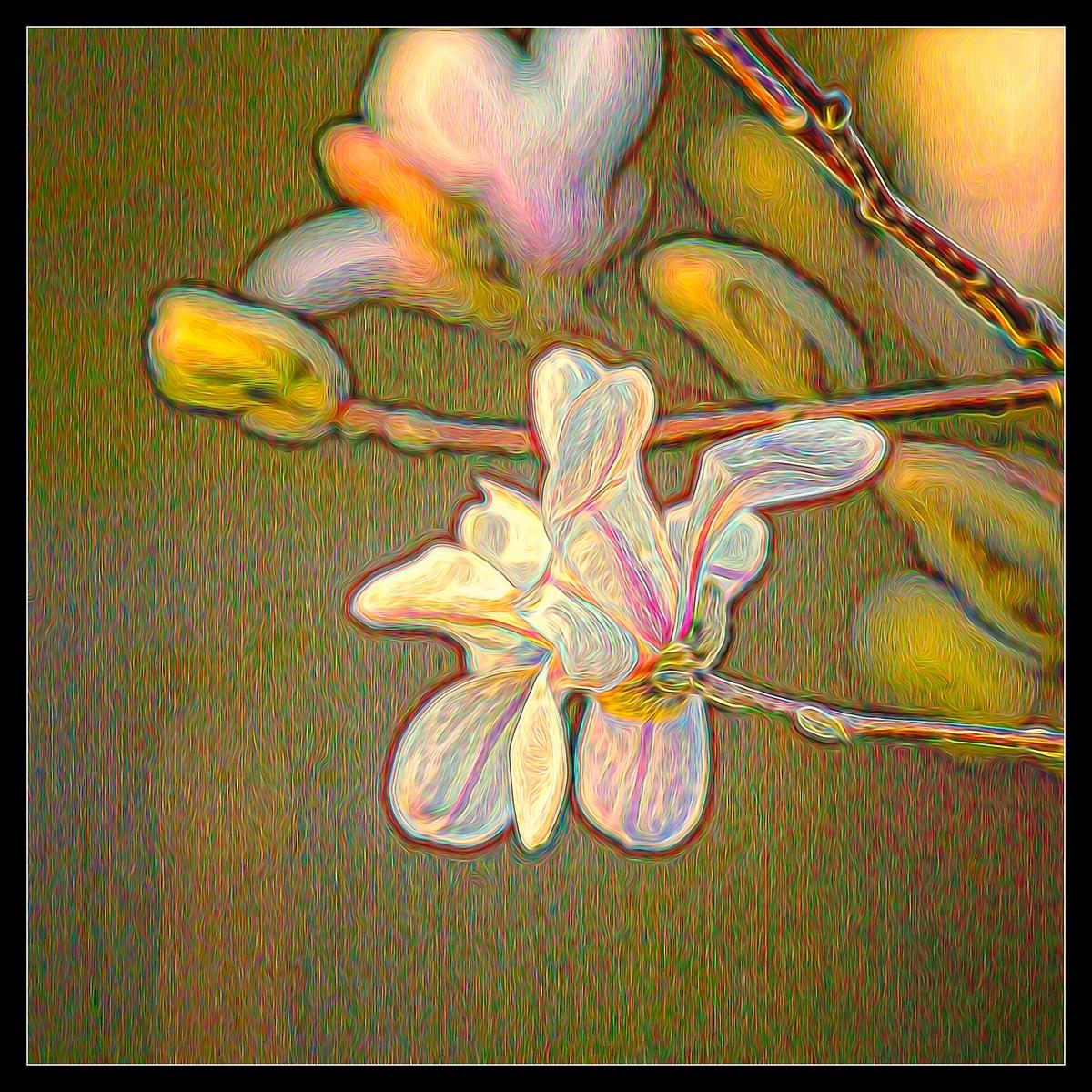 玉蘭花開春色到_圖1-6