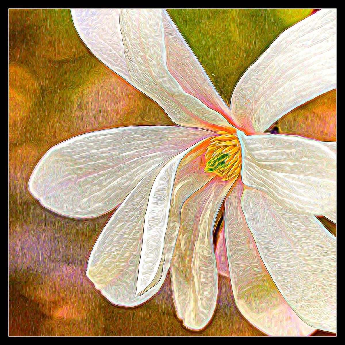 玉蘭花開春色到_圖1-8