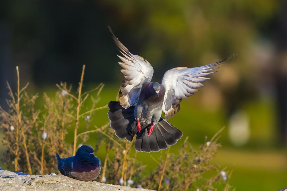 繼續拍鴿子,拍到過癮為止!_圖1-4