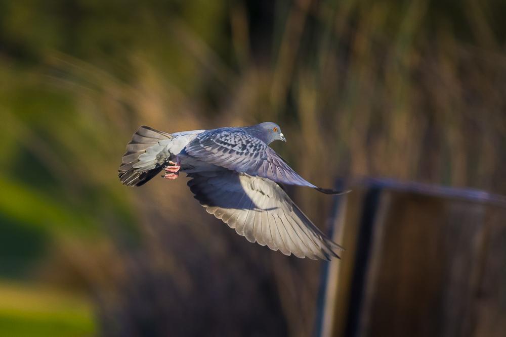 繼續拍鴿子,拍到過癮為止!_圖1-7