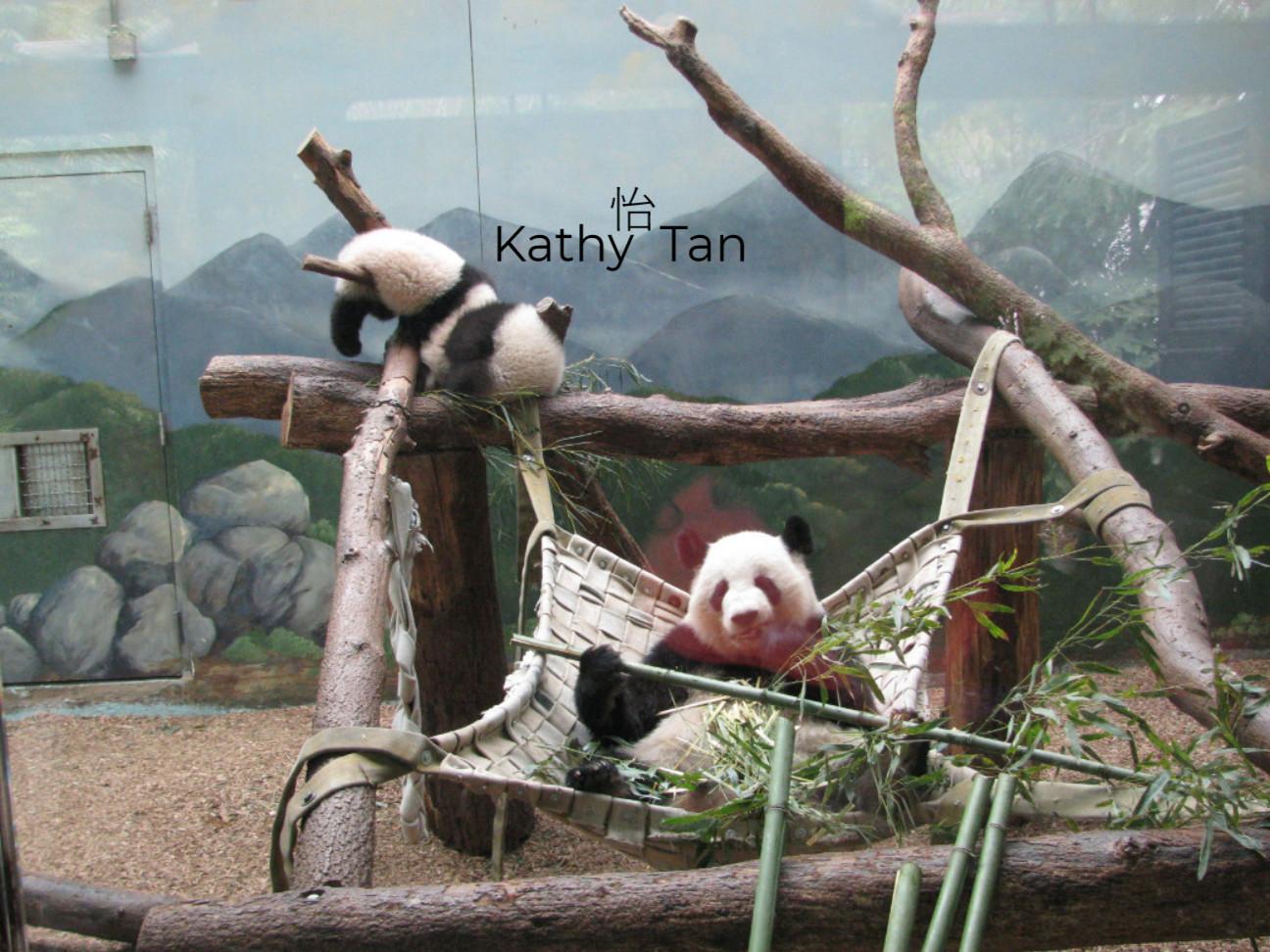 國寶熊貓_圖1-5