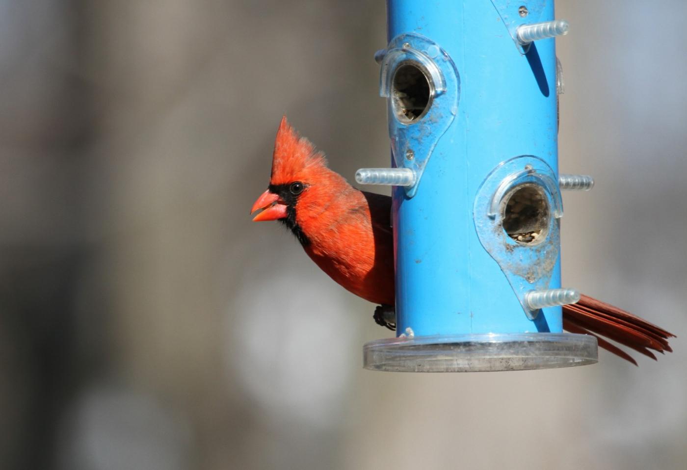 【田螺摄影】天暖了、把喂鸟器装满鸟就来了_图1-2
