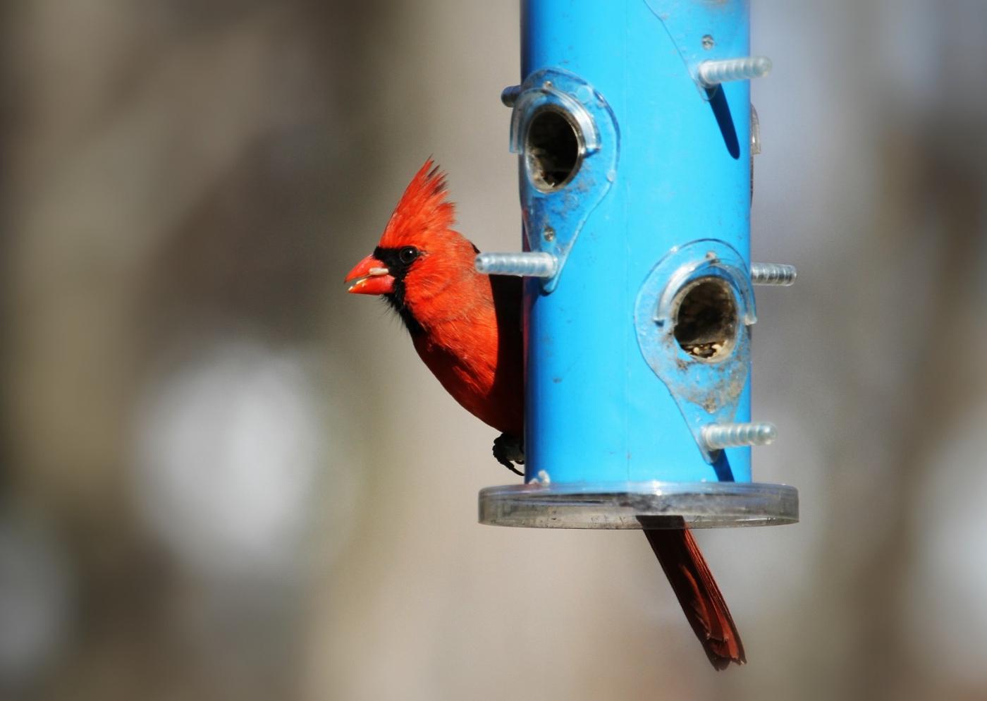 【田螺摄影】天暖了、把喂鸟器装满鸟就来了_图1-1