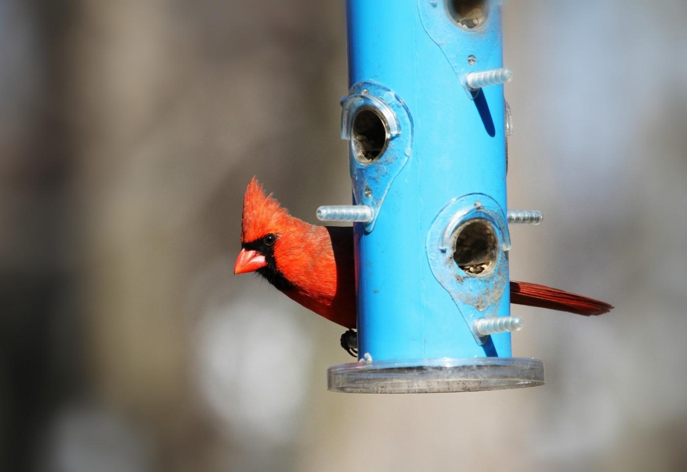 【田螺摄影】天暖了、把喂鸟器装满鸟就来了_图1-4
