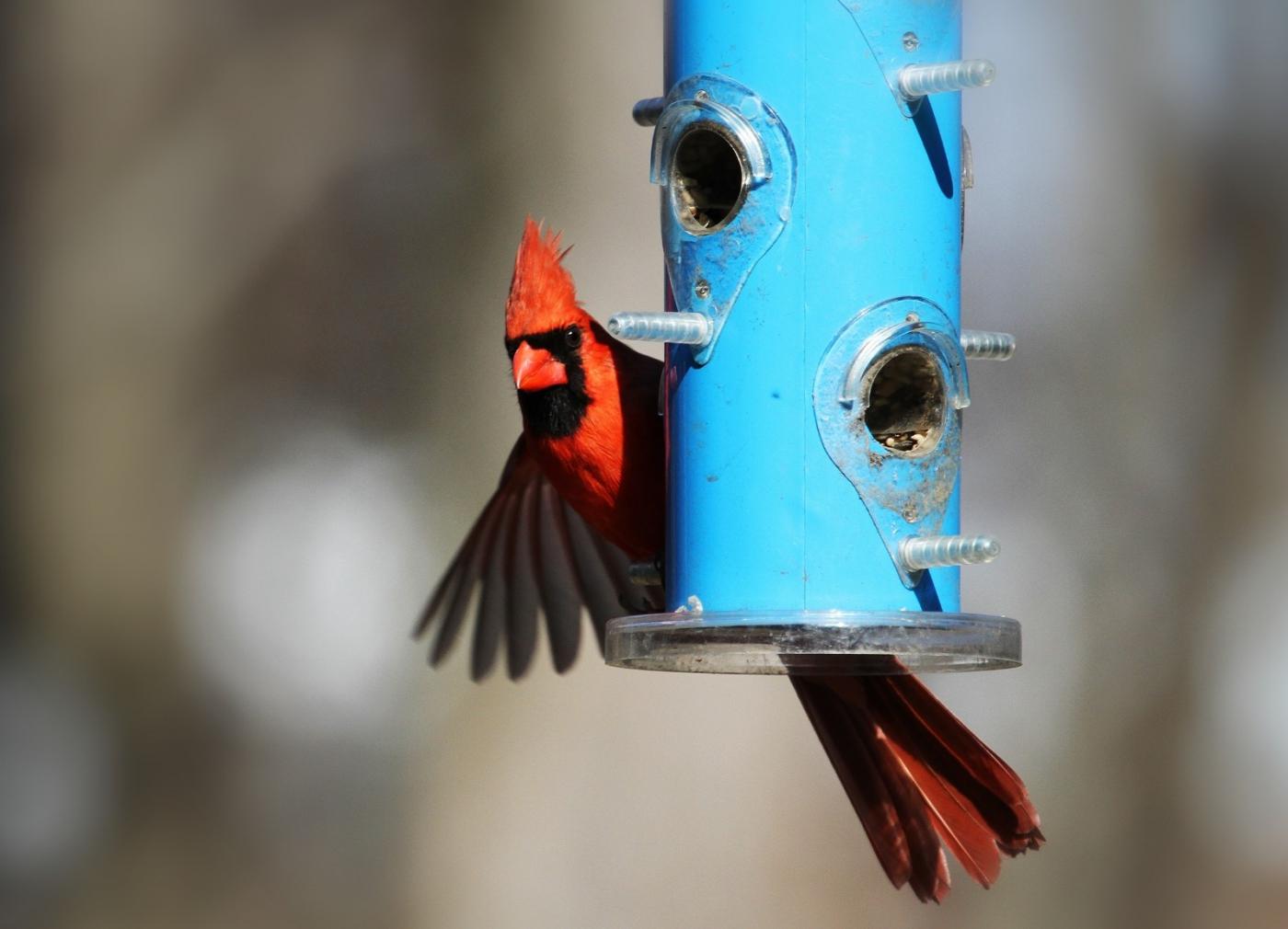 【田螺摄影】天暖了、把喂鸟器装满鸟就来了_图1-3