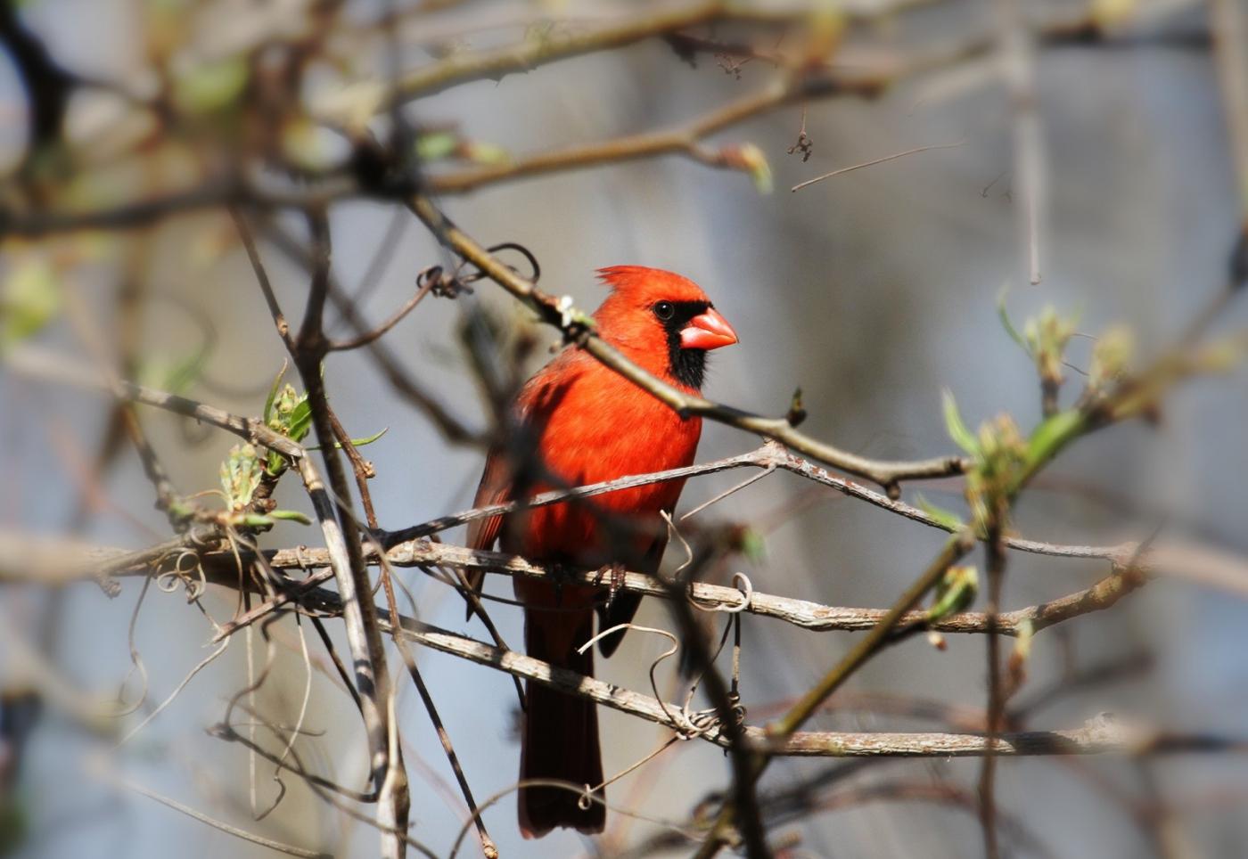 【田螺摄影】天暖了、把喂鸟器装满鸟就来了_图1-6