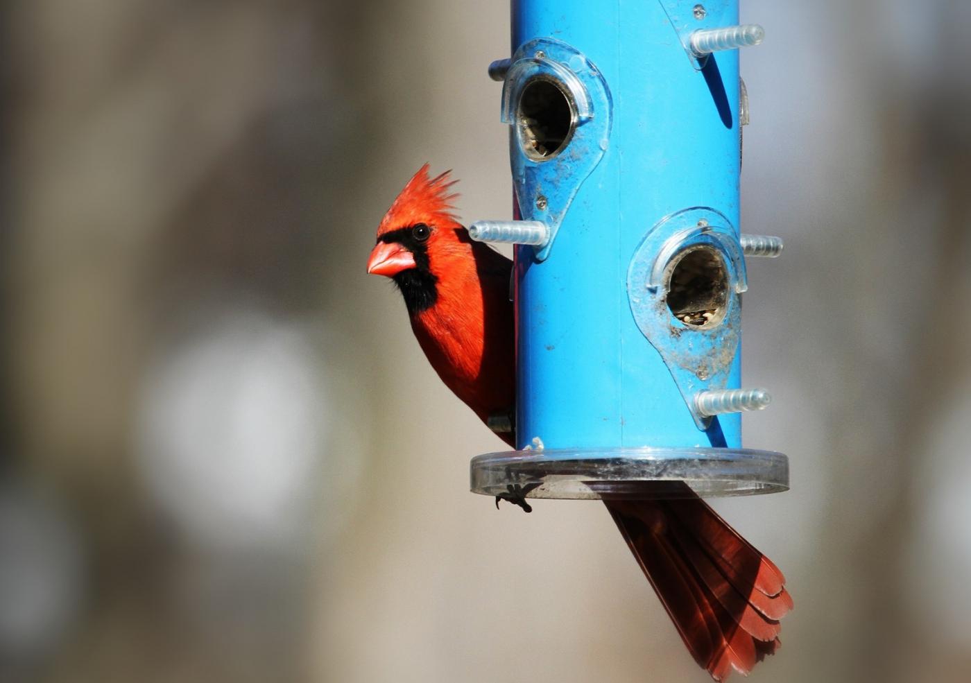 【田螺摄影】天暖了、把喂鸟器装满鸟就来了_图1-5