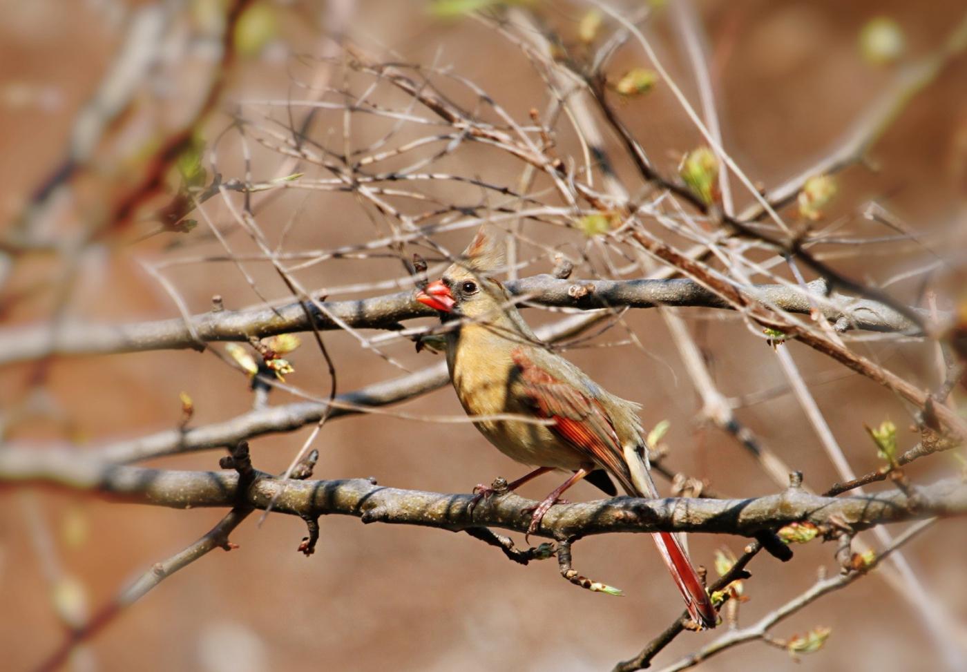 【田螺摄影】天暖了、把喂鸟器装满鸟就来了_图1-7