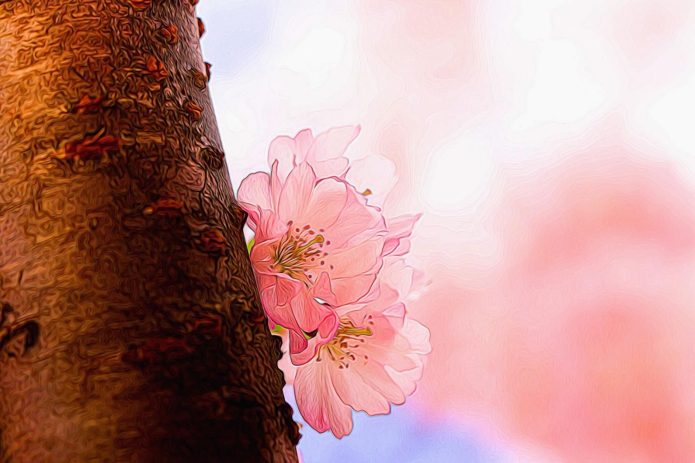 樱花秀_图1-8