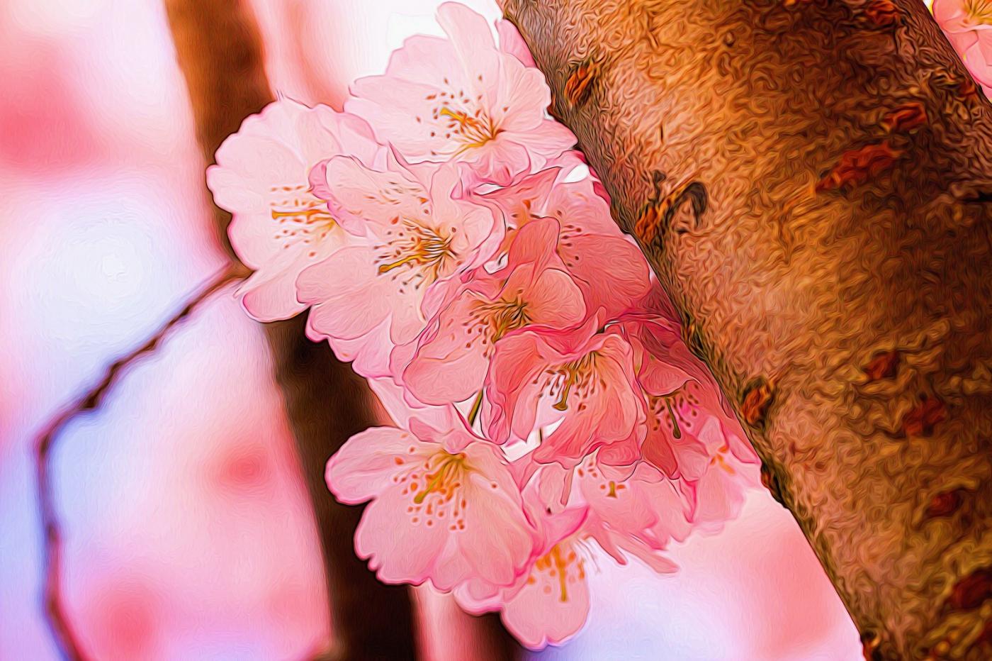 樱花秀_图1-3