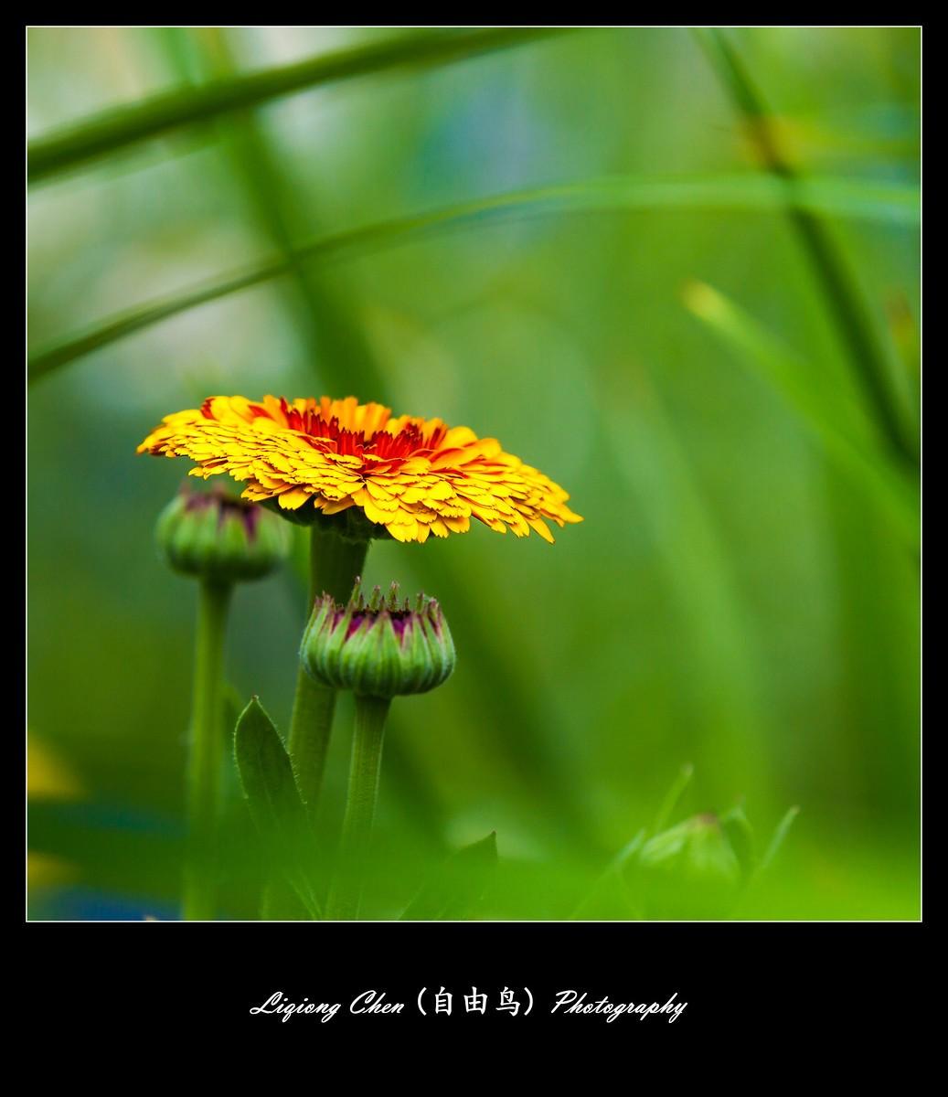 花儿朵朵开_图1-1