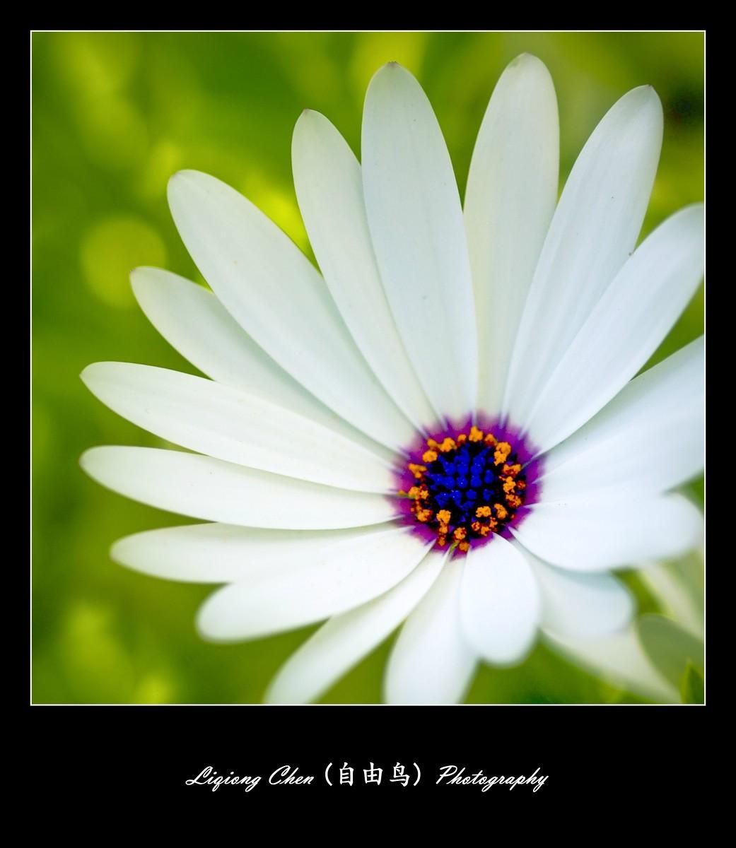 花儿朵朵开_图1-3