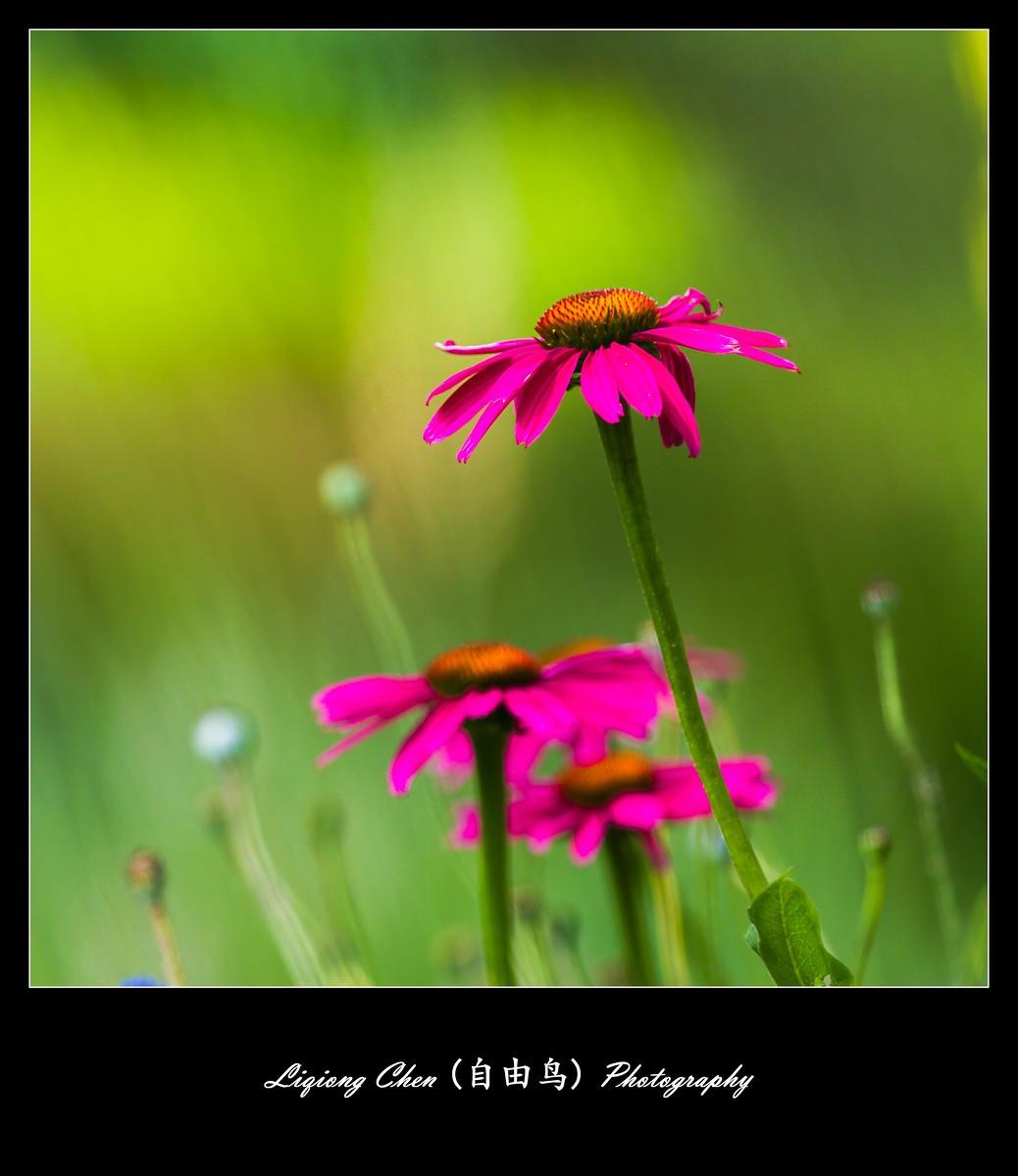 花儿朵朵开_图1-2