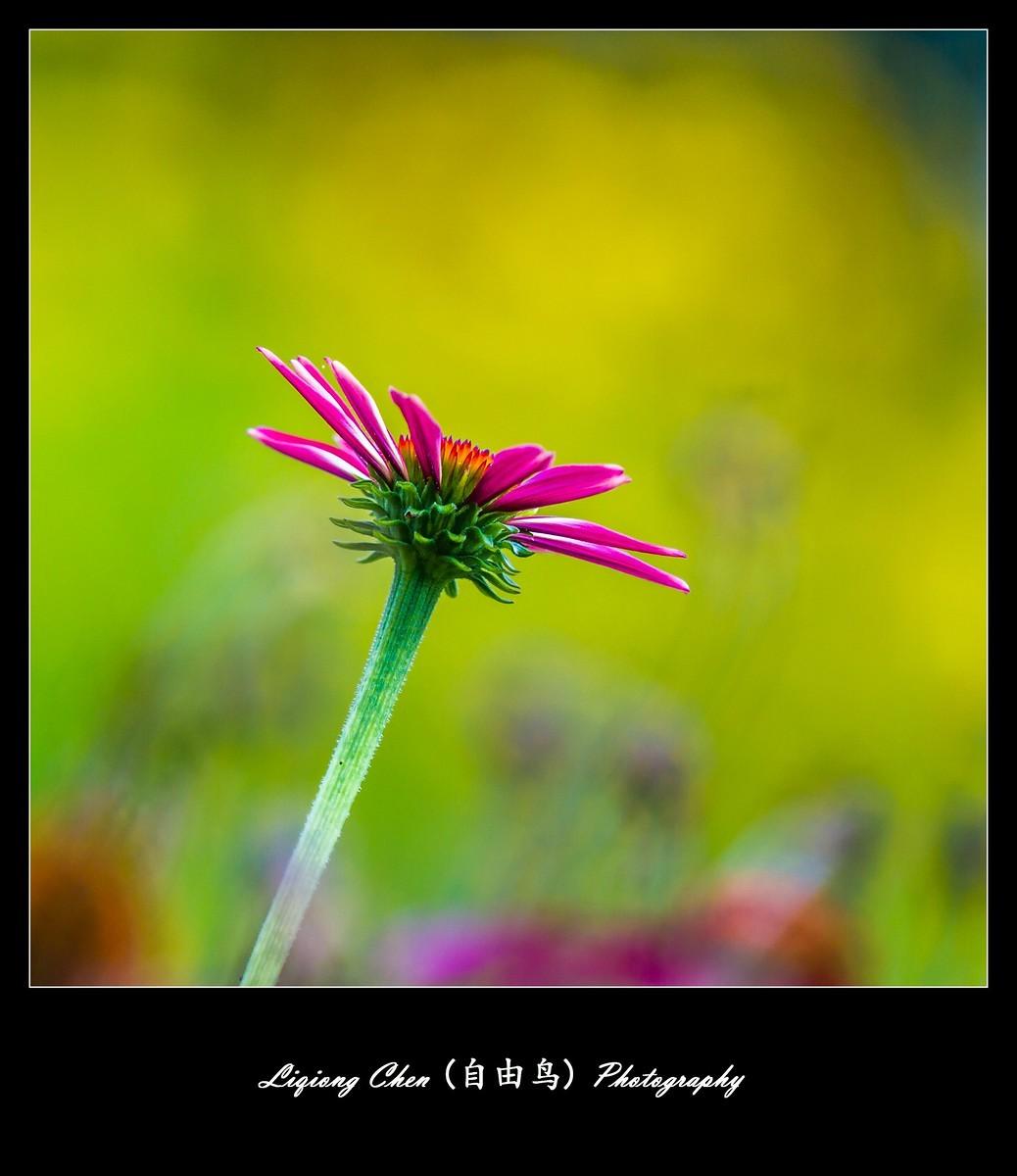 花儿朵朵开_图1-5