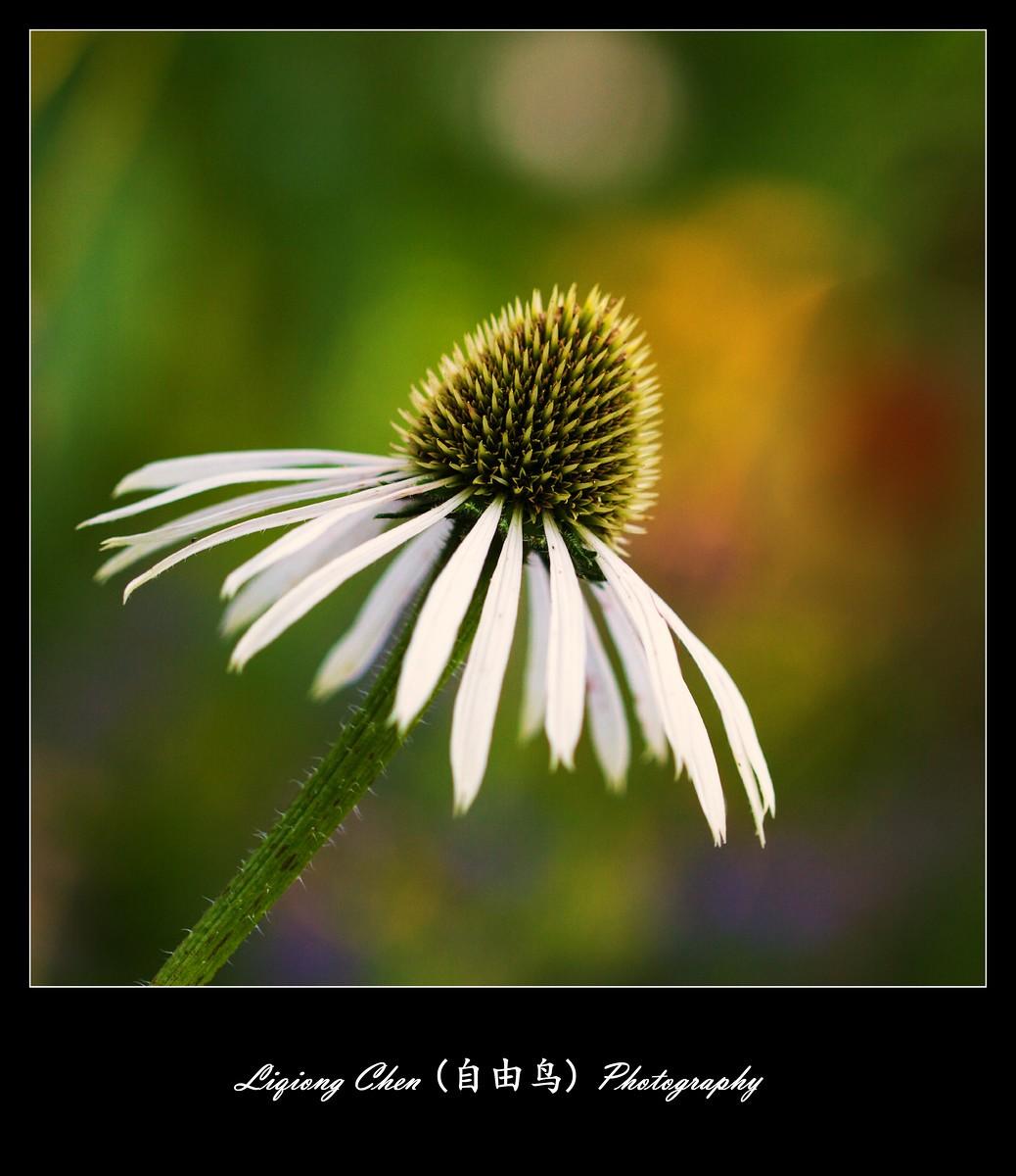 花儿朵朵开_图1-4