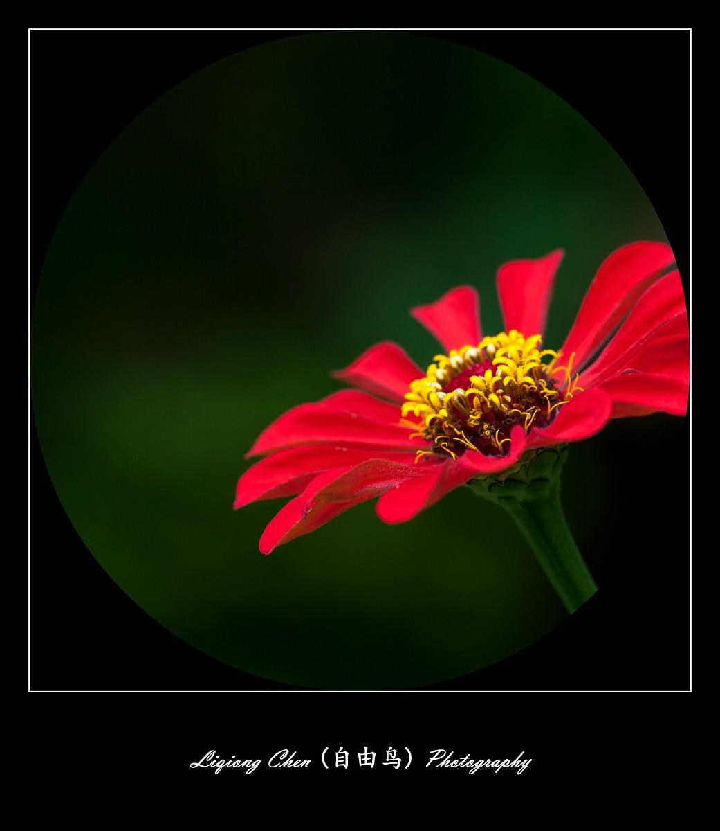 花儿朵朵开_图1-6