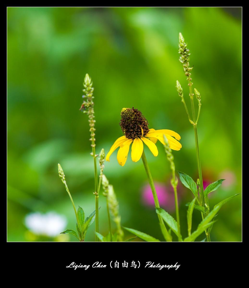 花儿朵朵开_图1-7
