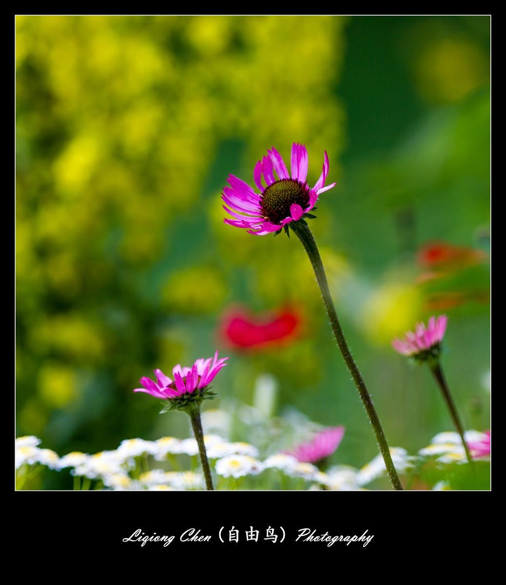 花儿朵朵开_图1-8
