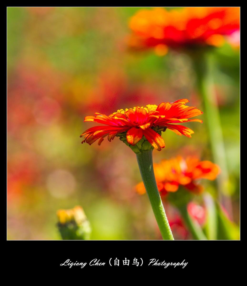 花儿朵朵开_图1-9