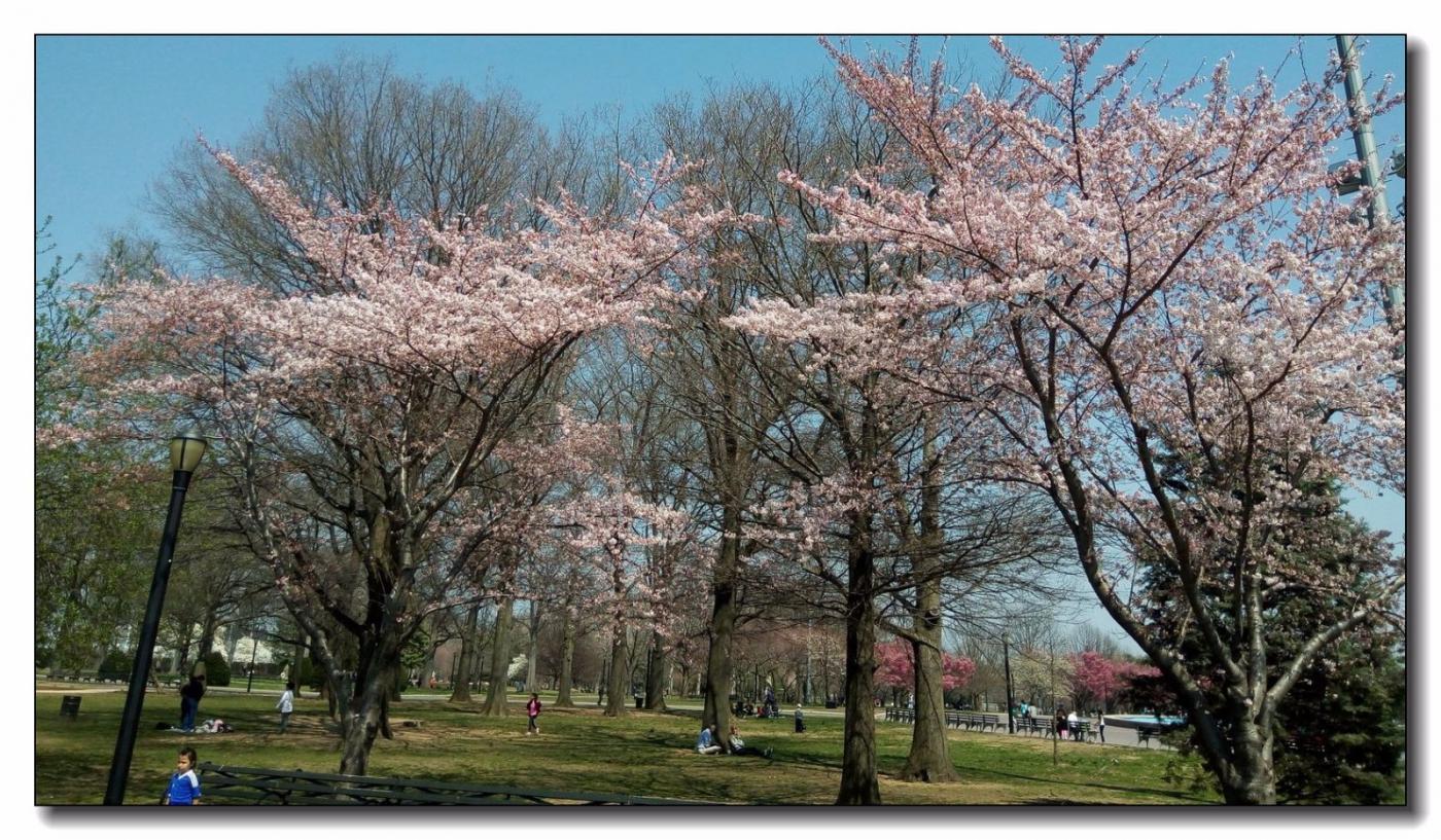 春滿可樂娜公園_圖1-6