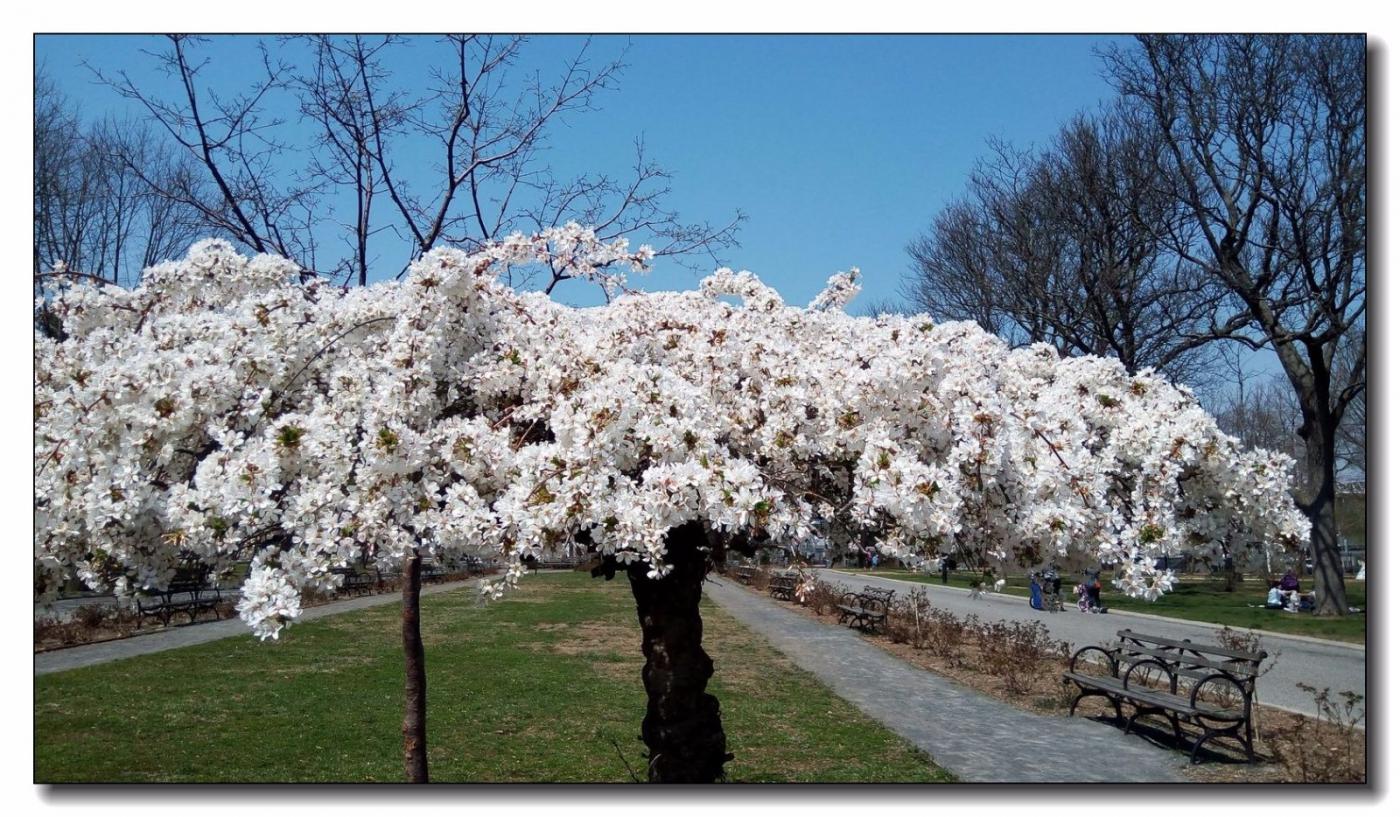 春满可乐娜公园_图1-7
