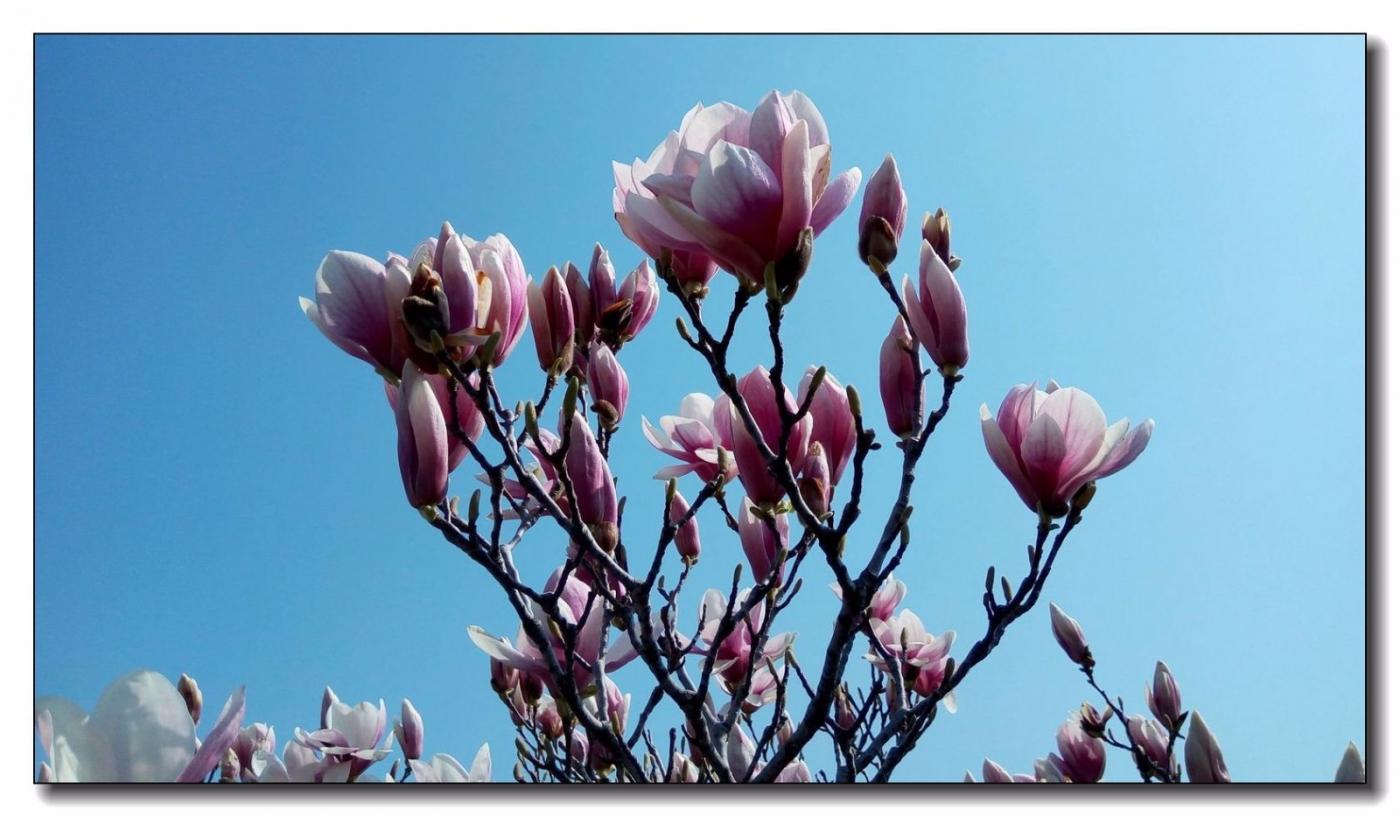 春滿可樂娜公園_圖1-8