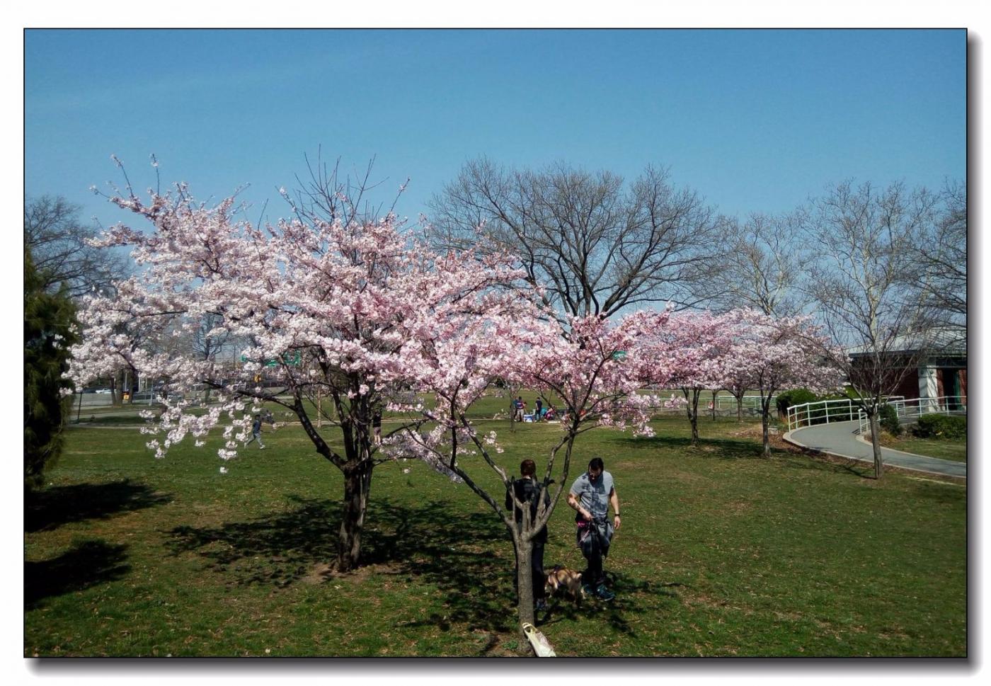 春满可乐娜公园_图1-9