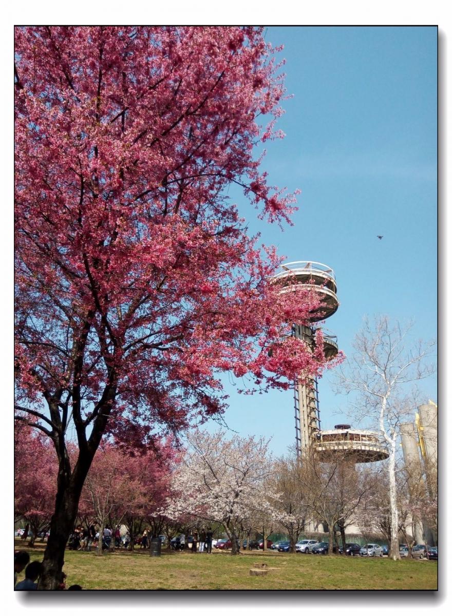 春滿可樂娜公園_圖1-11