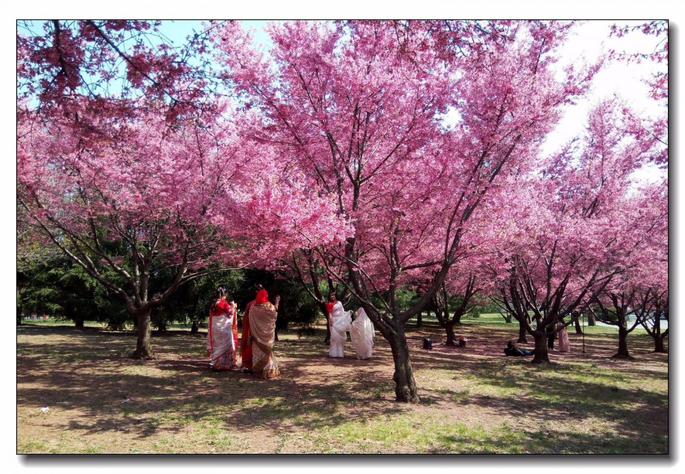 春滿可樂娜公園_圖1-12