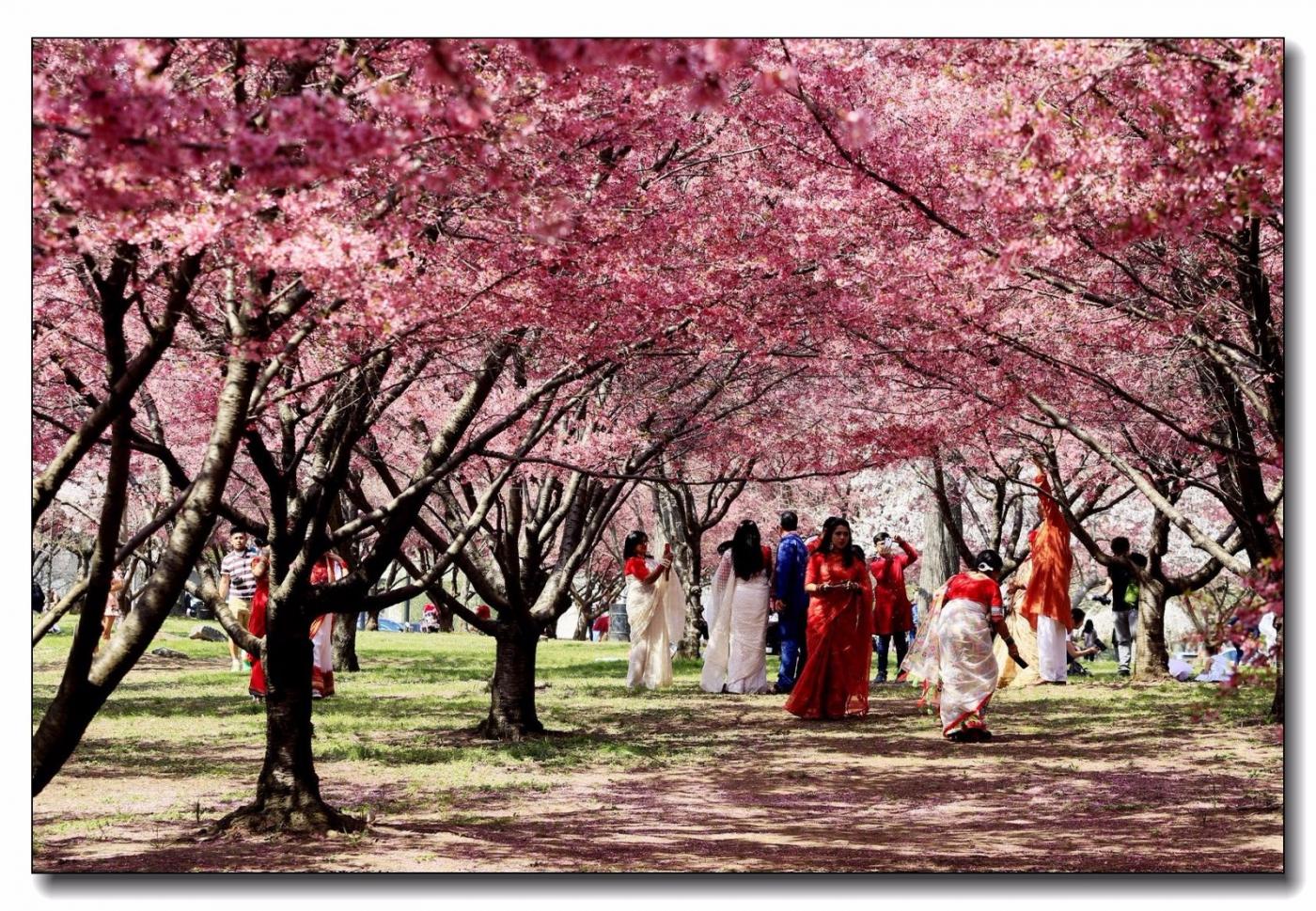 春满可乐娜公园_图1-13