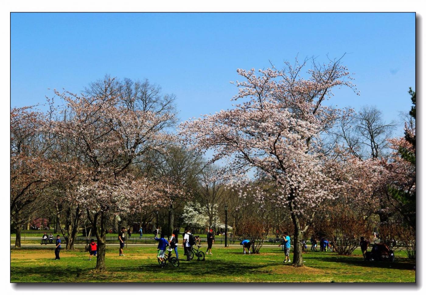 春滿可樂娜公園_圖1-14