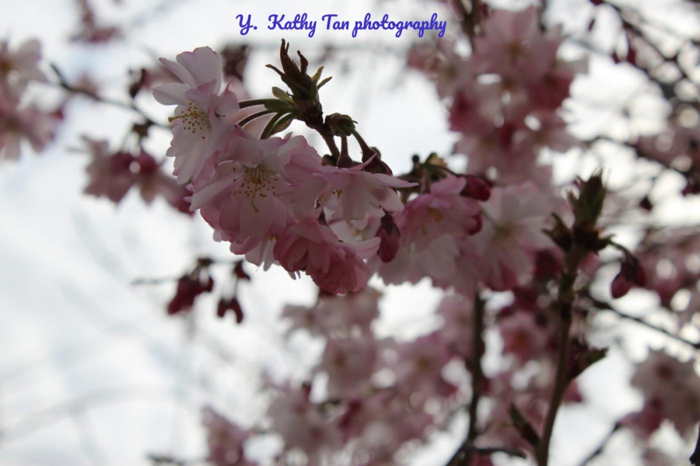 纽约花开(春天来了)_图1-2
