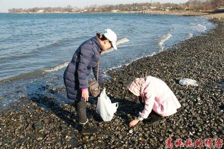 高娓娓:纽约海边公园捡生蚝做海鲜大餐_图1-1