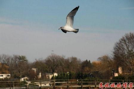 高娓娓:纽约海边公园捡生蚝做海鲜大餐_图1-9