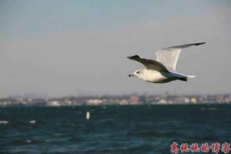 高娓娓:纽约海边公园捡生蚝做海鲜大餐_图1-10