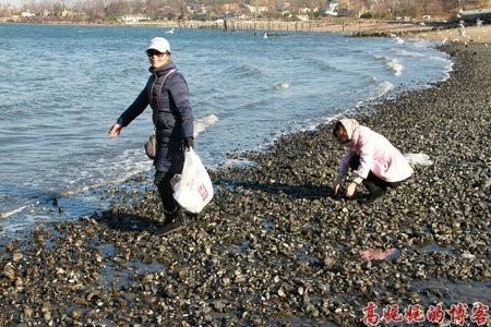 高娓娓:纽约海边公园捡生蚝做海鲜大餐_图1-12