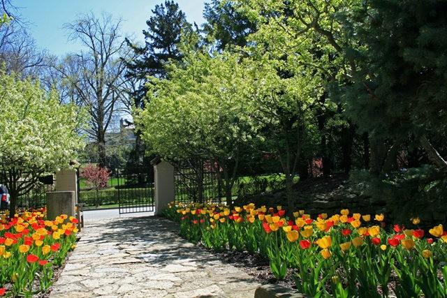 Smith Gardens花园拍郁金香_图1-2