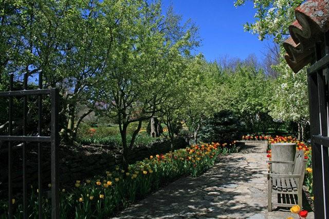 Smith Gardens花园拍郁金香_图1-3