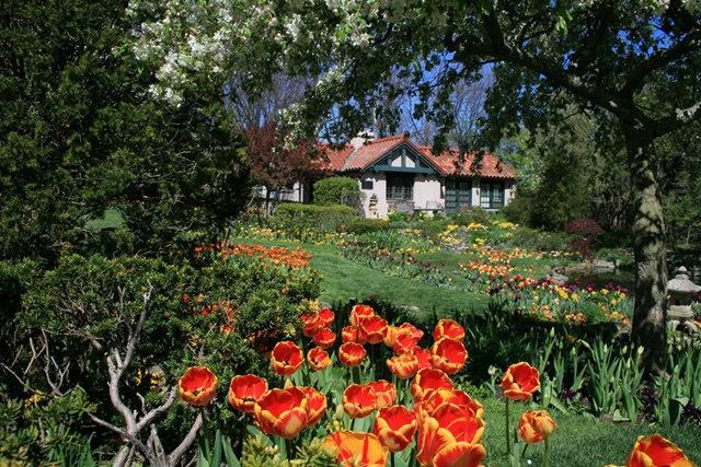 Smith Gardens花园拍郁金香_图1-7