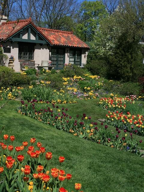 Smith Gardens花園拍郁金香_圖1-15
