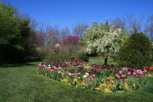 Smith Gardens花园拍郁金香_图1-19