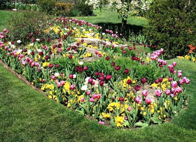 Smith Gardens花園拍郁金香_圖1-20