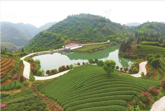 """""""中华文化名茶""""----武阳春雨_图1-12"""