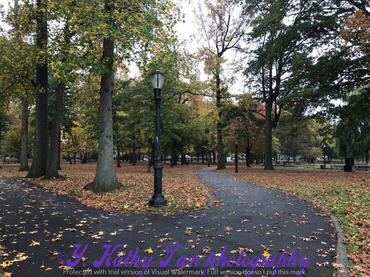 深秋的Bowne 公园_图1-2