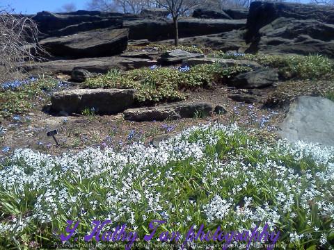 纽约植物公园_图1-2