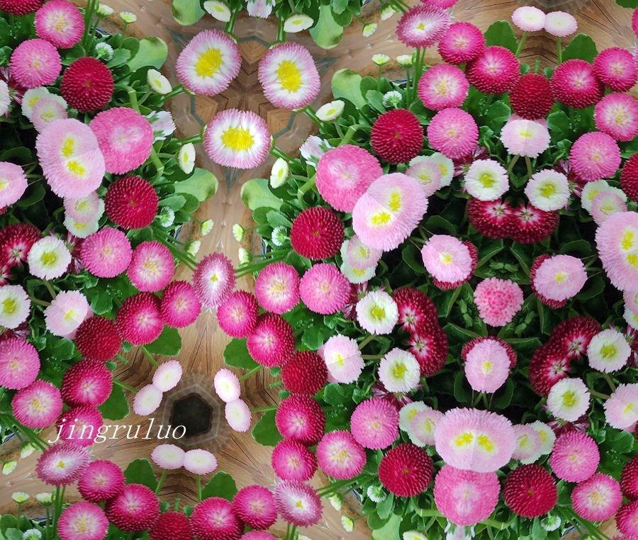 【小虫摄影】春天的颜色_图1-12