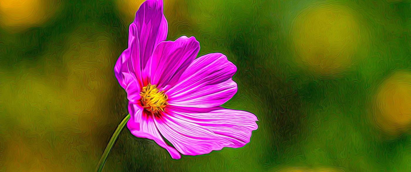 漂亮的罂粟花_图1-6